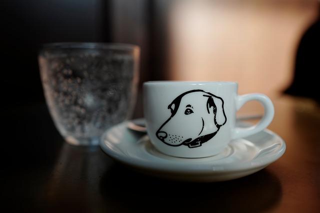 Bar à chien