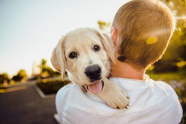 Accompagnement achat chien