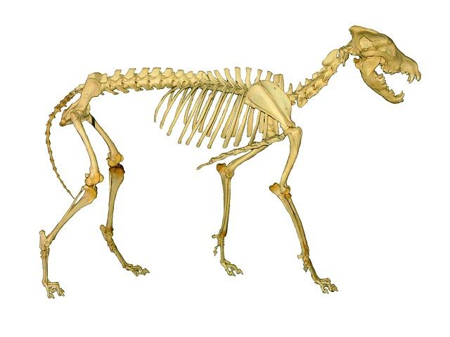 Ostéopathe canin