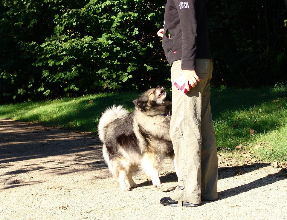 Les promenades/balades éducatives pour votre chien
