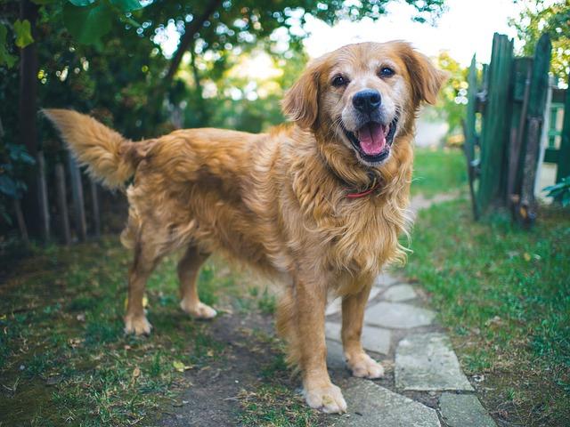 Confier son chien à un promeneur de chien(s) dans le 63