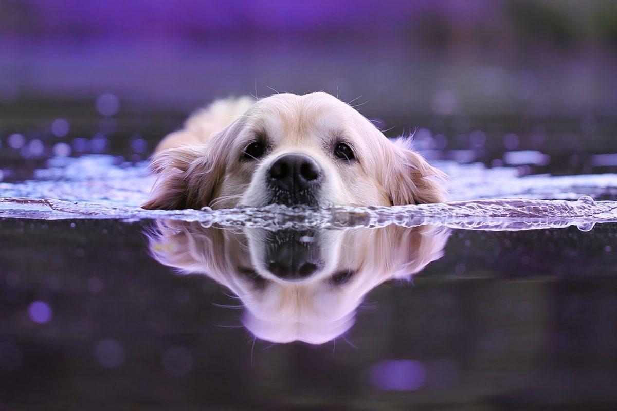 Baignade chien 63