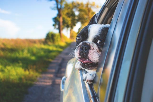Pension pour chiens : Garde canine dans le Puy-de-Dôme (63)