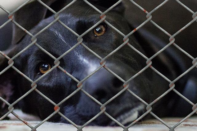 Aide à l'adoption d'un chien