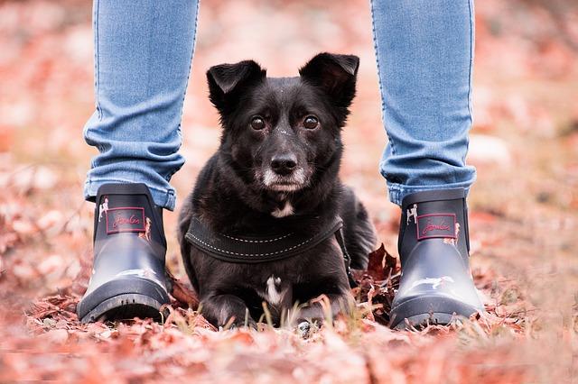 éducatrice canin