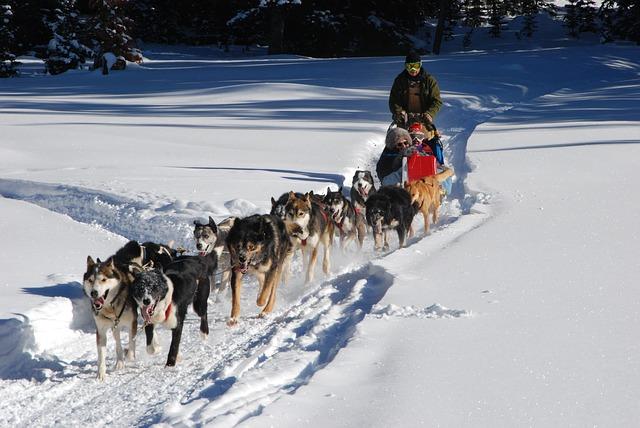 Balade en traineau à chien dans les massifs auvergnats