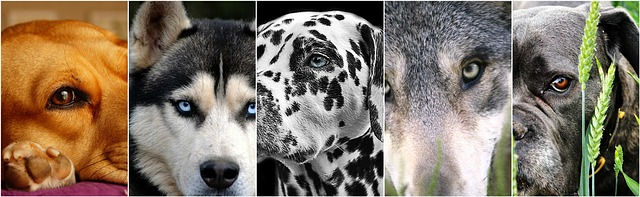 Vous cherchez un modèle chien pour un casting photo ou vidéo ?