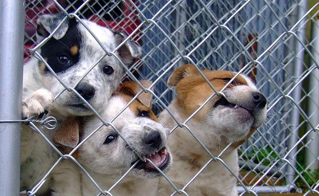 Adopter un chien dans l'une des associations de protection animale du Puy-de-Dôme