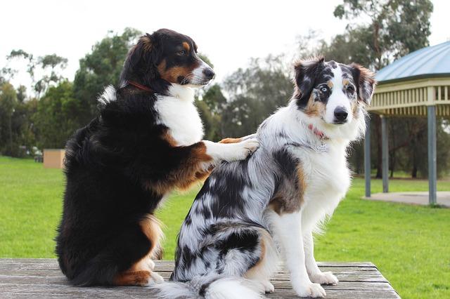 Kinésithérapeute canin