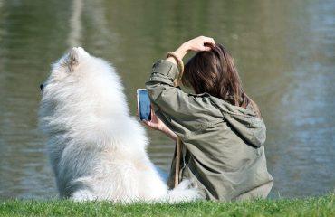 Téléconsultation éducateur canin
